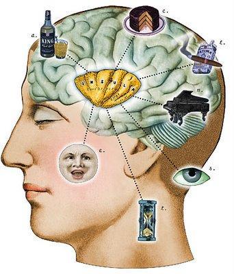 Ilustración cerebro y placer