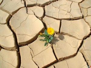 imagen resiliencia